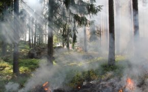 Forest Fire