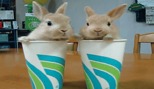 Bunny gif